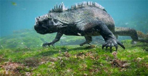 """现实版""""哥斯拉""""怪兽 现身加拉帕戈斯群岛 样子太吓人"""