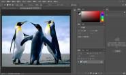 想要把Photoshop CC当中的图片进行缩小,这两个方法很实用