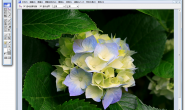 SOHO图形软件官方免费电脑版下载(媲美PS的图片编辑软件)